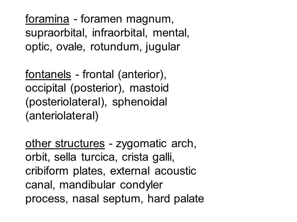foramina - foramen magnum, supraorbital, infraorbital, mental, optic, ovale, rotundum, jugular