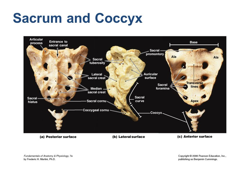 Sacrum and Coccyx