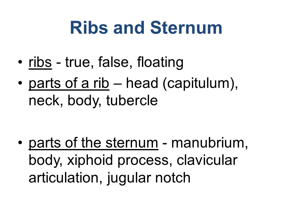 Ribs and Sternum ribs - true, false, floating