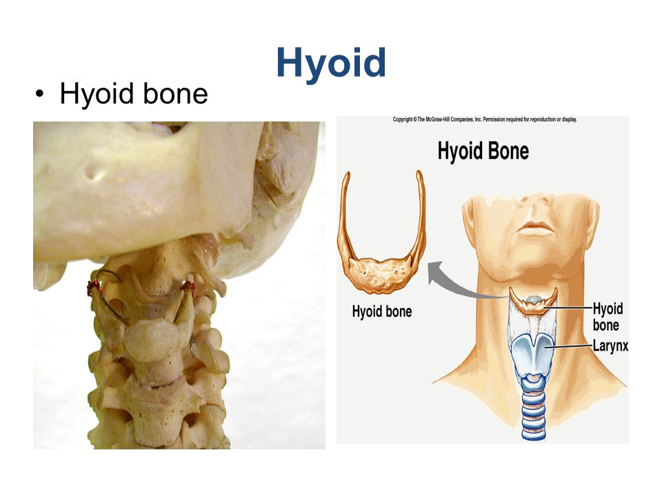 Hyoid Hyoid bone