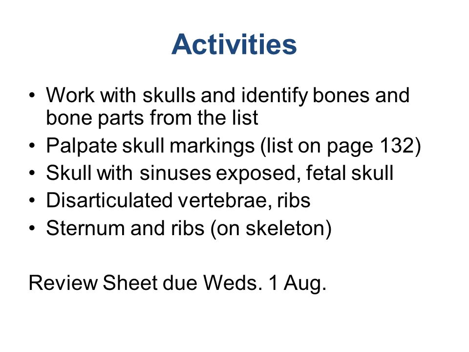 Activities Work with skulls and identify bones and bone parts from the list. Palpate skull markings (list on page 132)