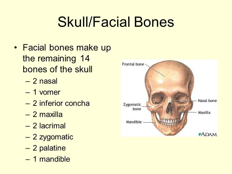 Skull/Facial Bones Facial bones make up the remaining 14 bones of the skull. 2 nasal. 1 vomer. 2 inferior concha.