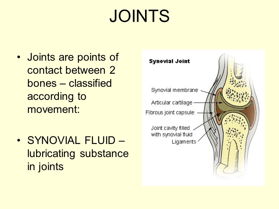 JOINTS Joints are points of contact between 2 bones – classified according to movement: SYNOVIAL FLUID – lubricating substance in joints.