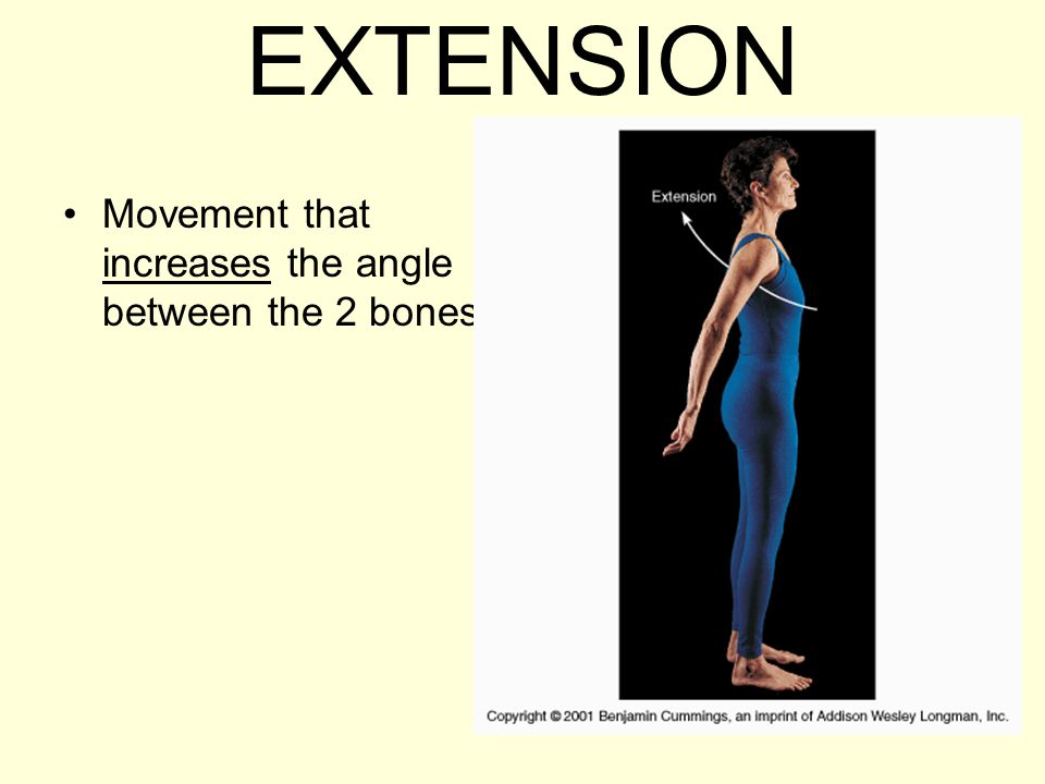 EXTENSION Movement that increases the angle between the 2 bones.