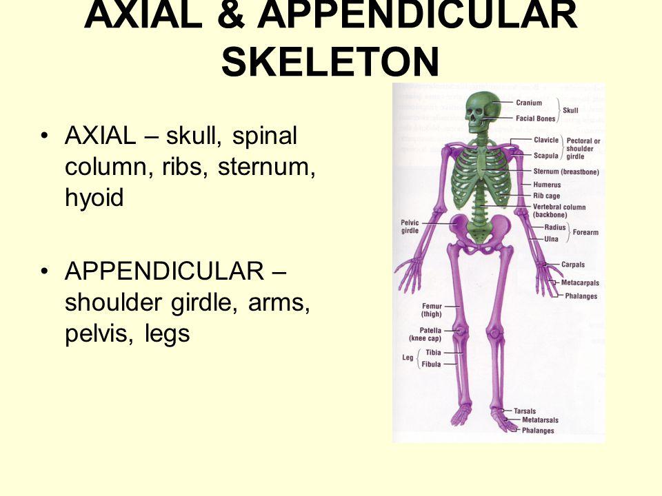 AXIAL & APPENDICULAR SKELETON
