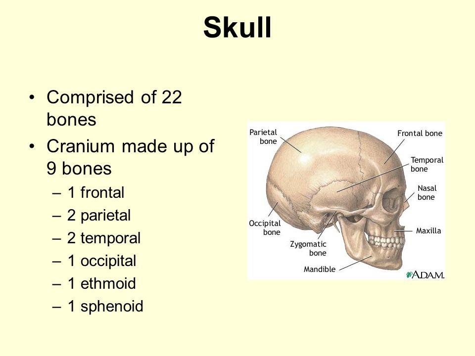 Skull Comprised of 22 bones Cranium made up of 9 bones 1 frontal