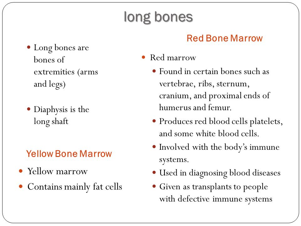 long bones Yellow marrow Contains mainly fat cells Red Bone Marrow