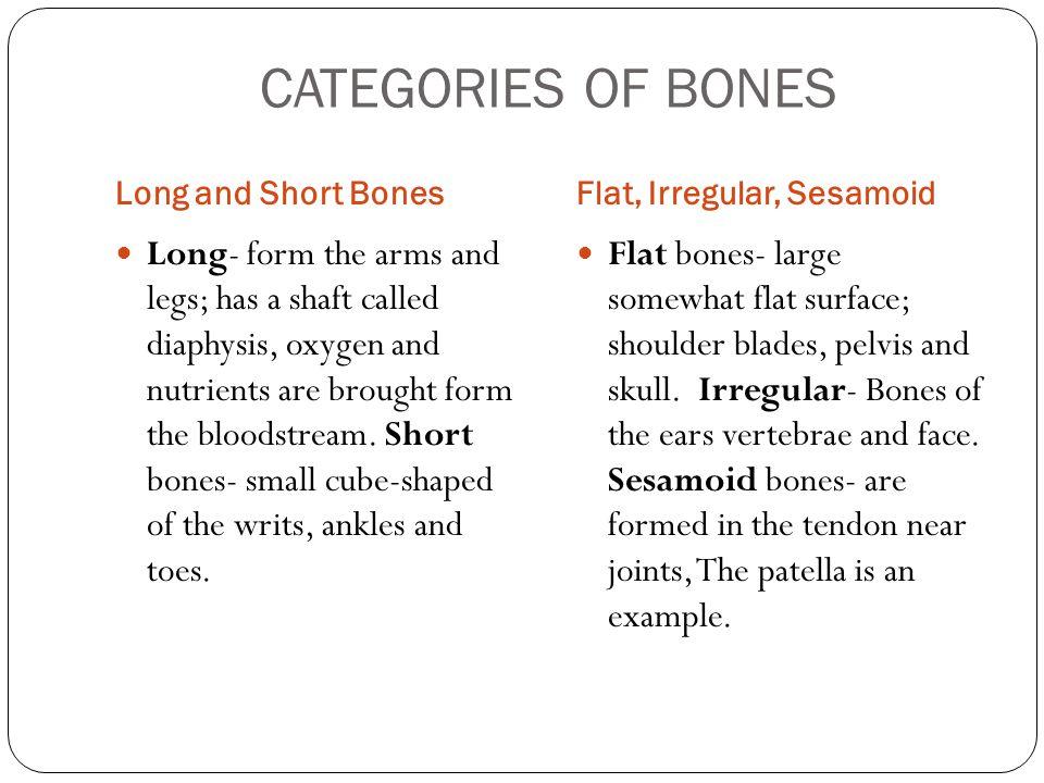 CATEGORIES OF BONES Long and Short Bones. Flat, Irregular, Sesamoid.