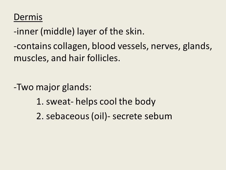 Dermis -inner (middle) layer of the skin