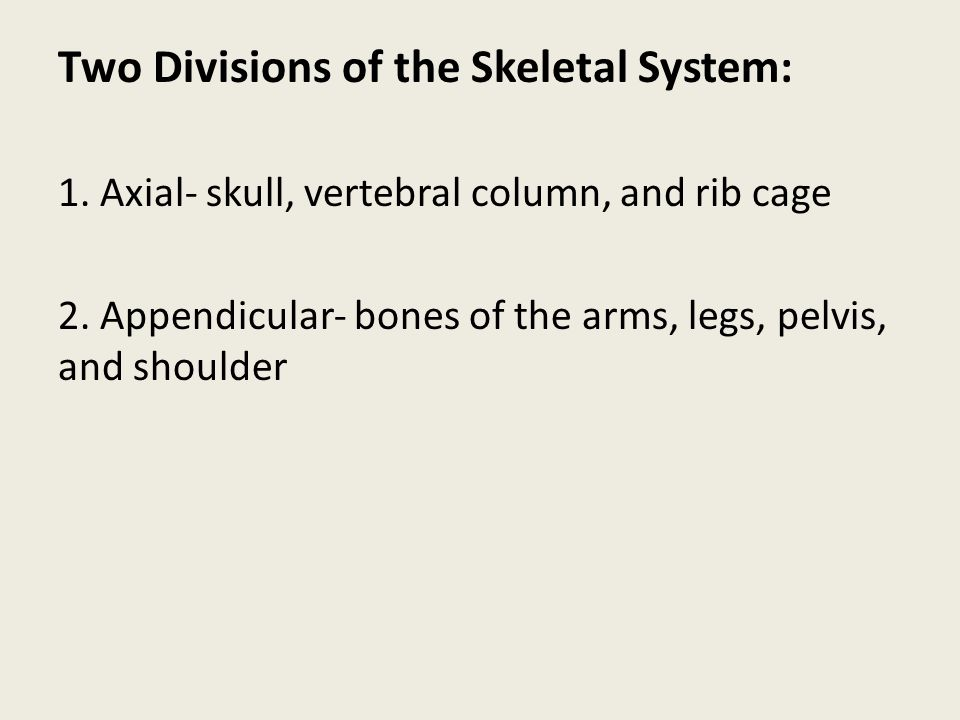 Two Divisions of the Skeletal System: