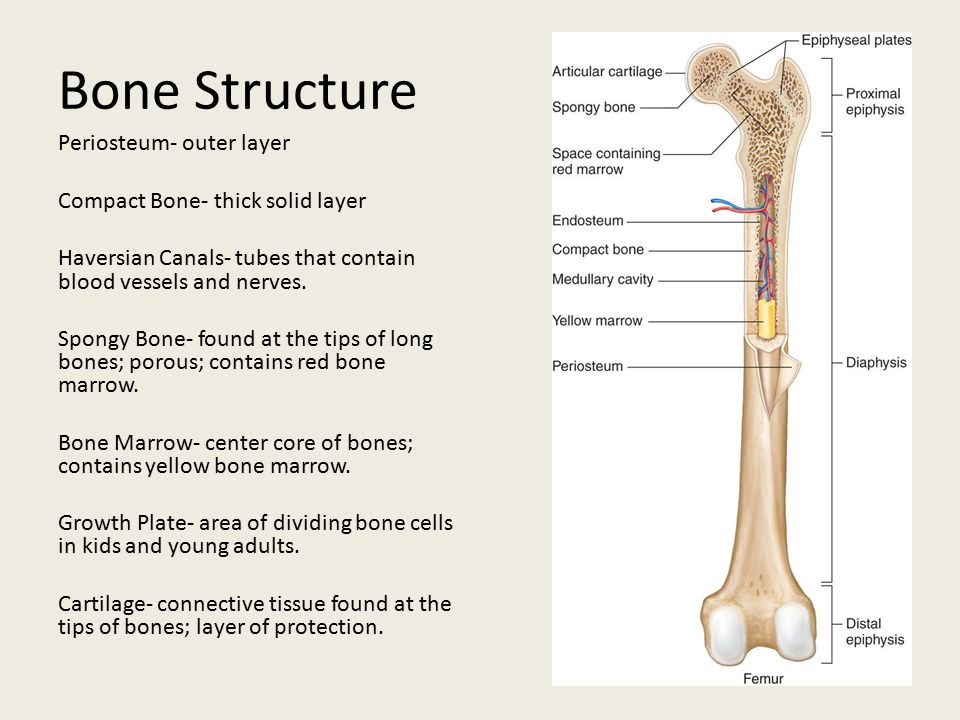 skeletal  muscular  and integumentary systems