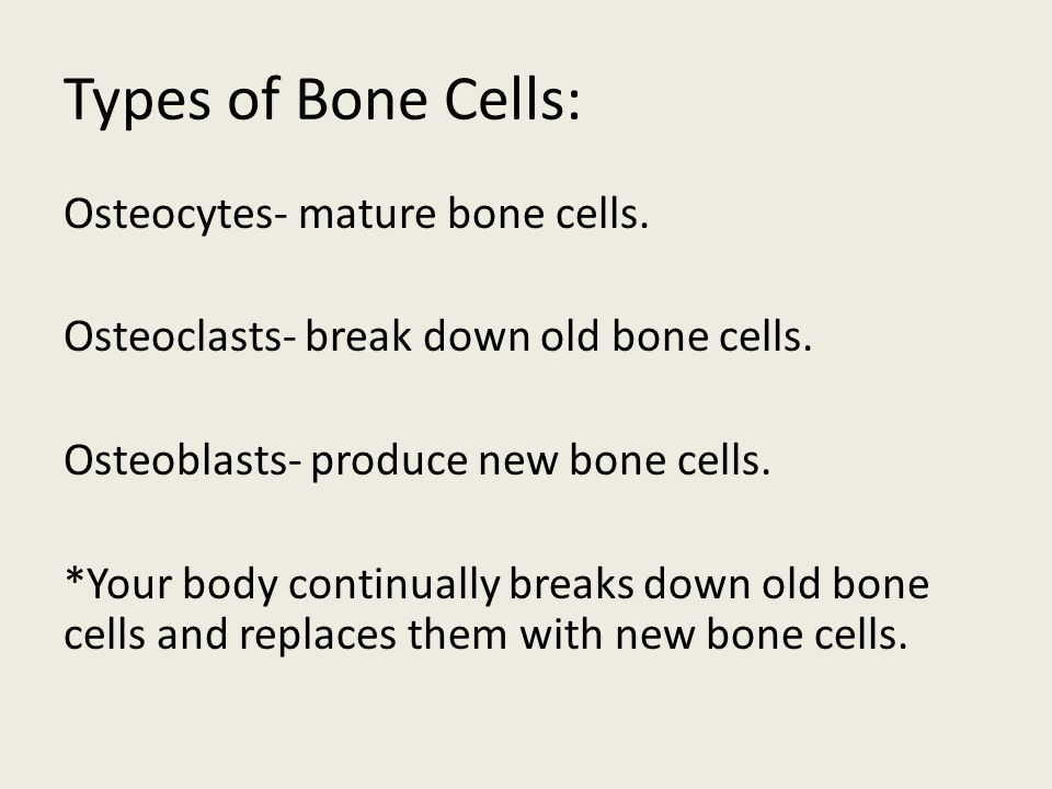 Types of Bone Cells: