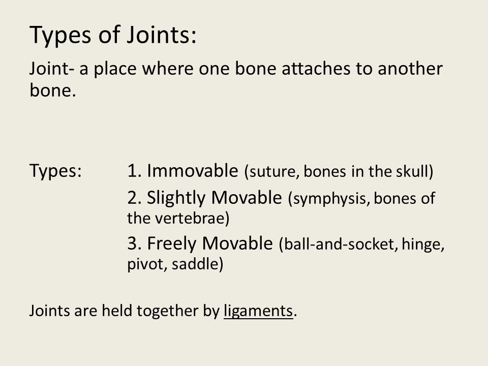 Types of Joints: Joint- a place where one bone attaches to another bone. Types: 1. Immovable (suture, bones in the skull)
