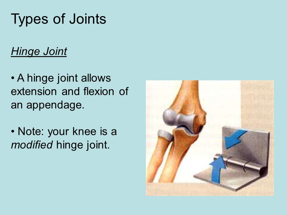 Types of Joints Hinge Joint • A hinge joint allows