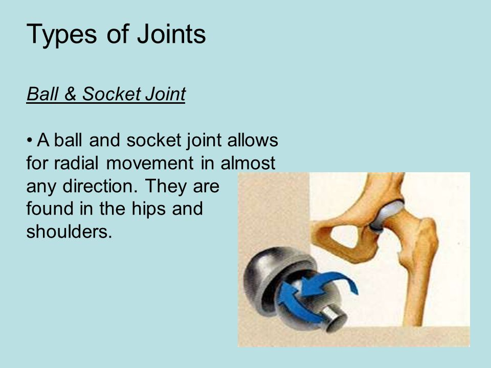 Types of Joints Ball & Socket Joint