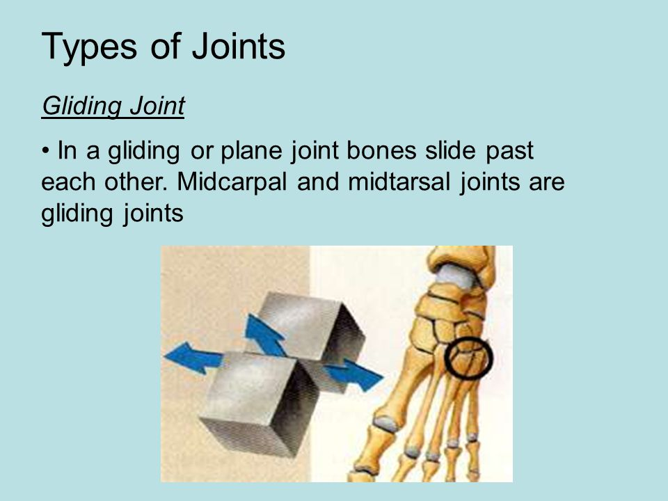 Types of Joints Gliding Joint