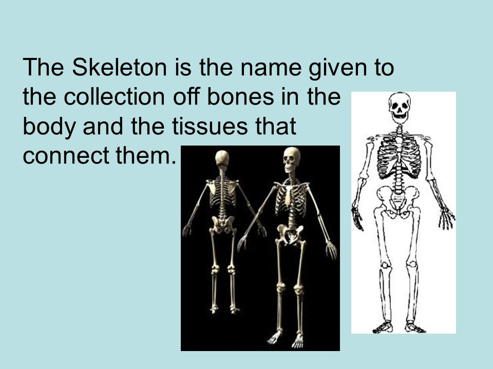 The Skeleton is the name given to