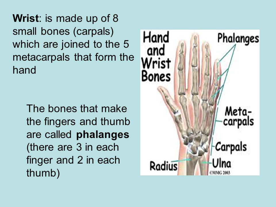 Wrist: is made up of 8 small bones (carpals) which are joined to the 5 metacarpals that form the hand