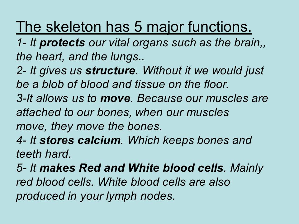 The skeleton has 5 major functions.