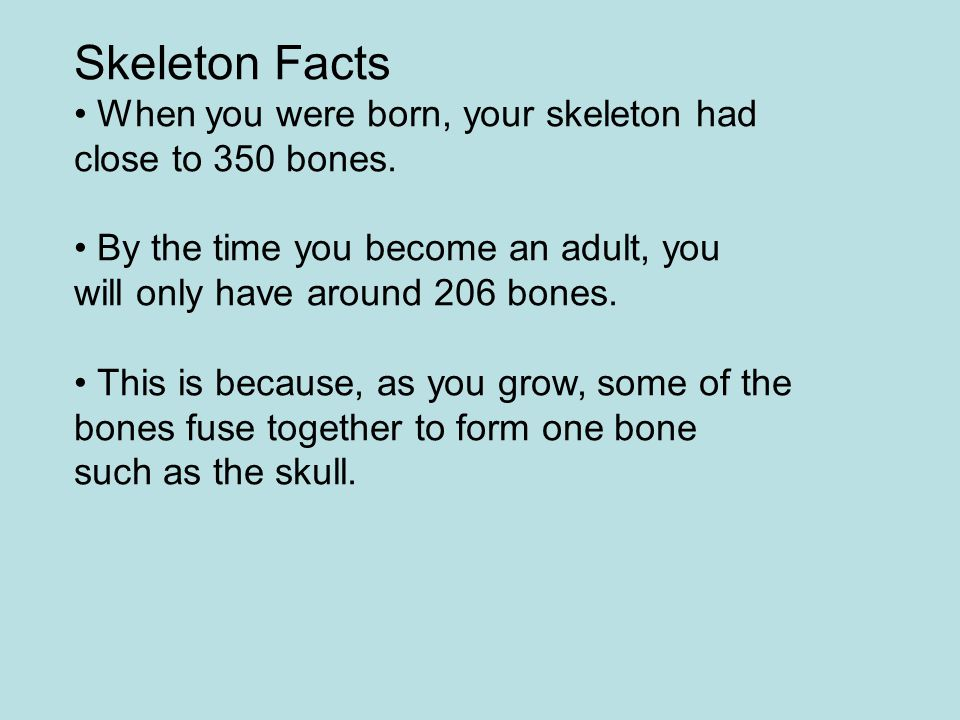 Skeleton Facts • When you were born, your skeleton had