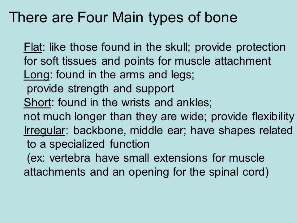 There are Four Main types of bone