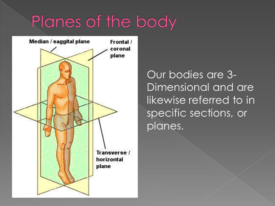 Planes of the body Our bodies are 3-Dimensional and are likewise referred to in specific sections, or planes.