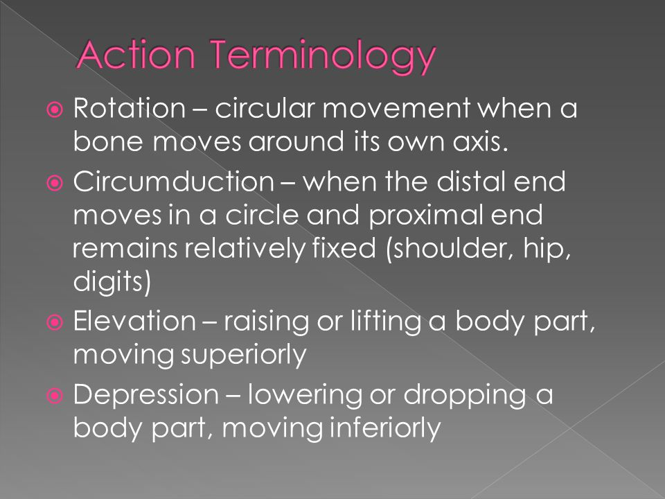 Action Terminology Rotation – circular movement when a bone moves around its own axis.