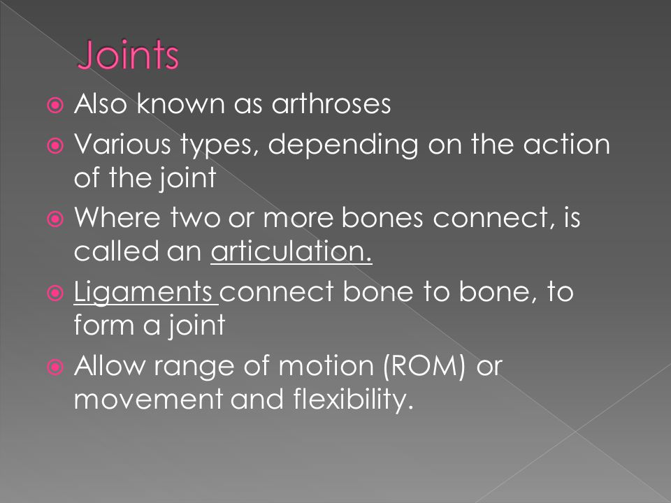 Joints Also known as arthroses
