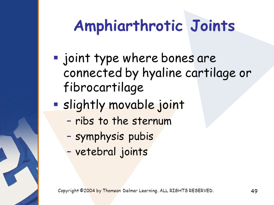 Amphiarthrotic Joints
