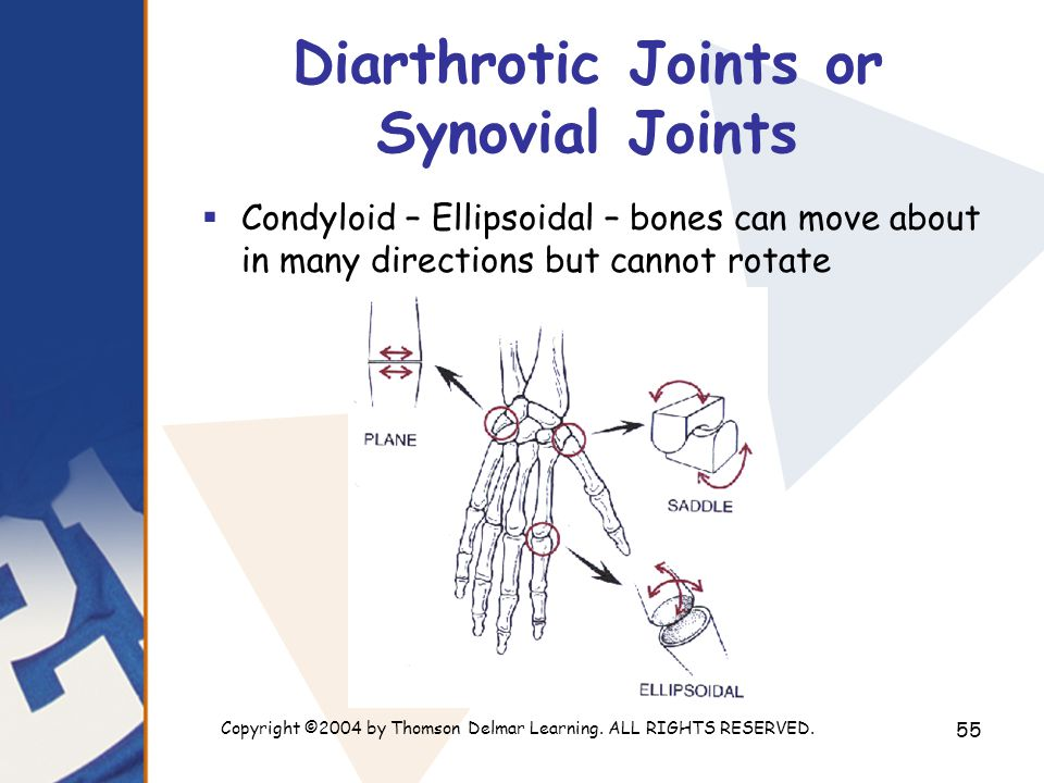 Diarthrotic Joints or Synovial Joints