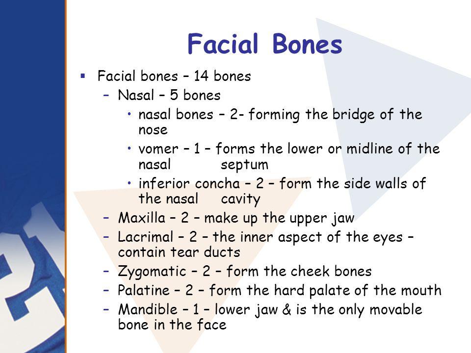 Facial Bones Facial bones – 14 bones Nasal – 5 bones