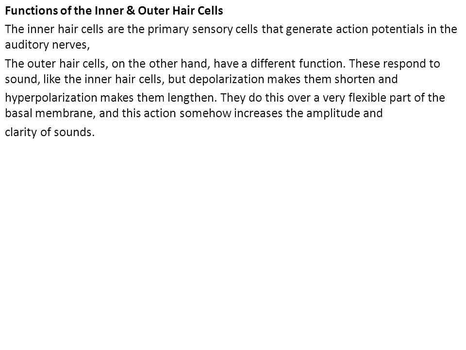 Functions of the Inner & Outer Hair Cells