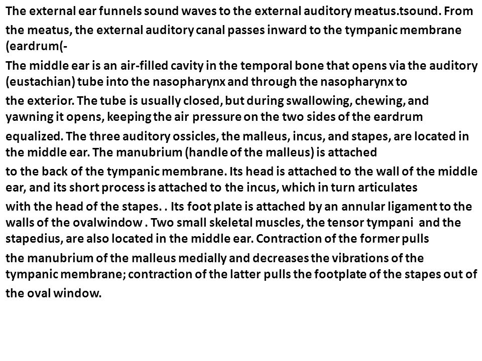 The external ear funnels sound waves to the external auditory meatus