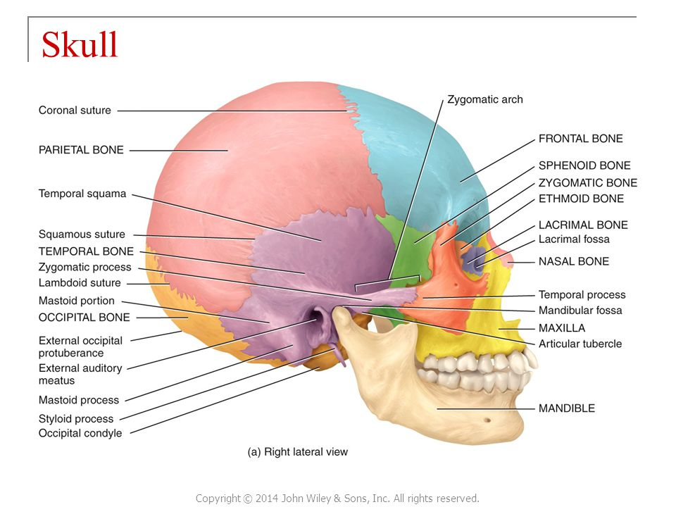 Atemberaubend Wiley Principles Of Anatomy And Physiology Ideen ...