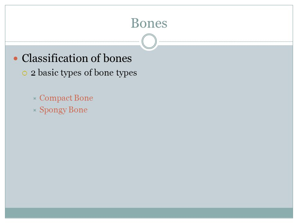 Bones Classification of bones 2 basic types of bone types Compact Bone