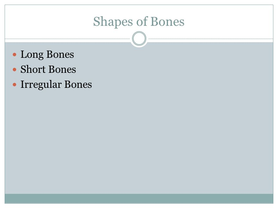 Shapes of Bones Long Bones Short Bones Irregular Bones