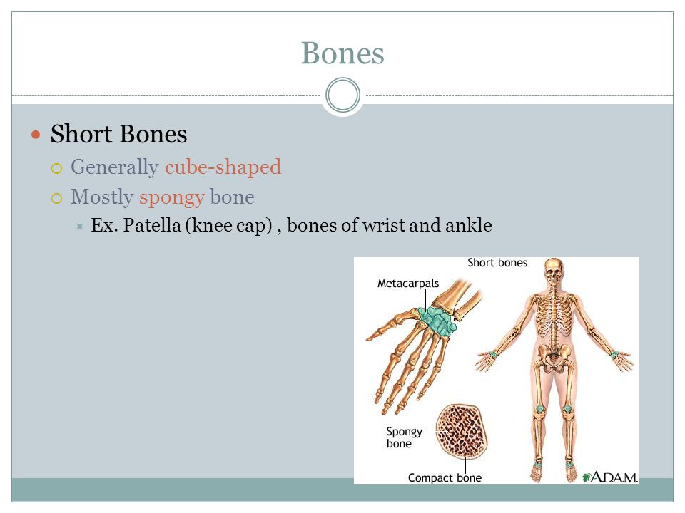 Bones Short Bones Generally cube-shaped Mostly spongy bone
