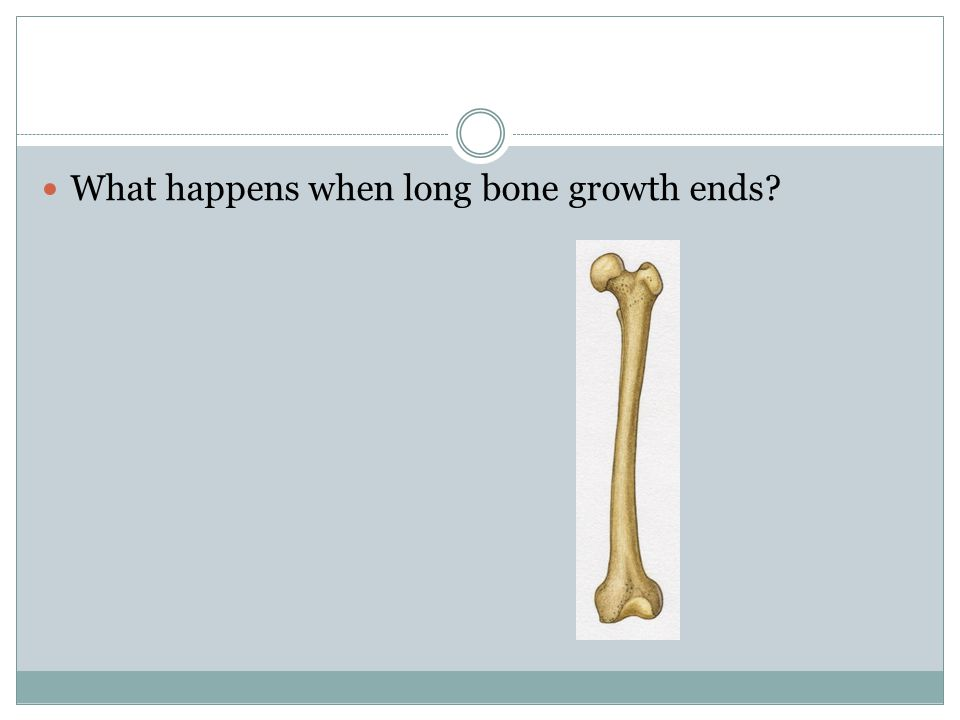 What happens when long bone growth ends
