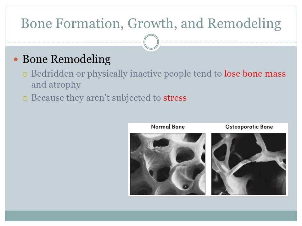 Bone Formation, Growth, and Remodeling