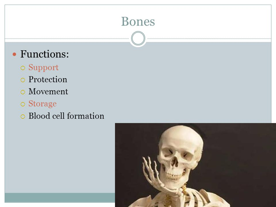 Bones Functions: Support Protection Movement Storage