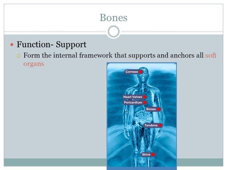 Bones Function- Support
