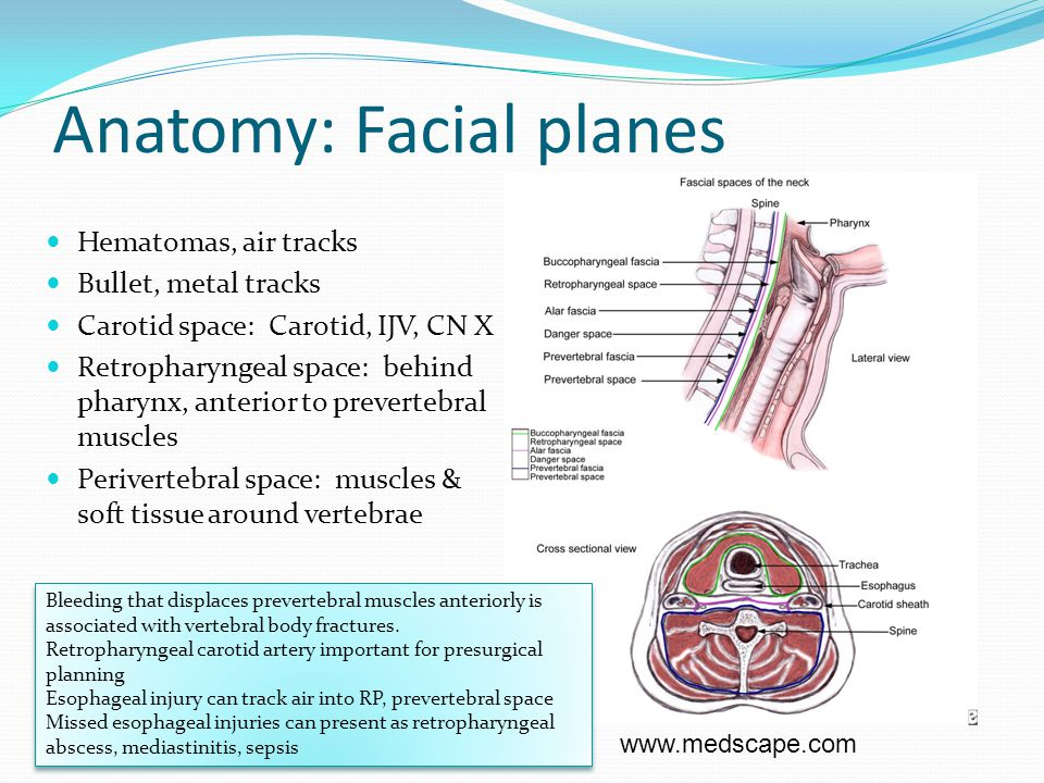 Anatomy: Facial planes