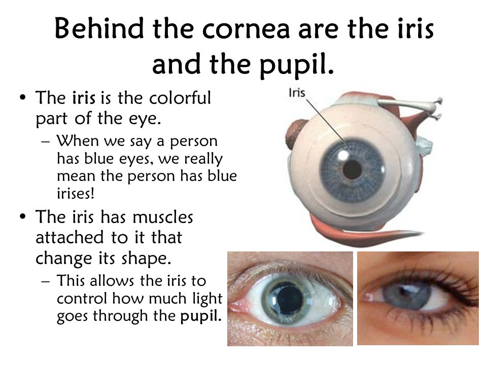 Behind the cornea are the iris and the pupil.