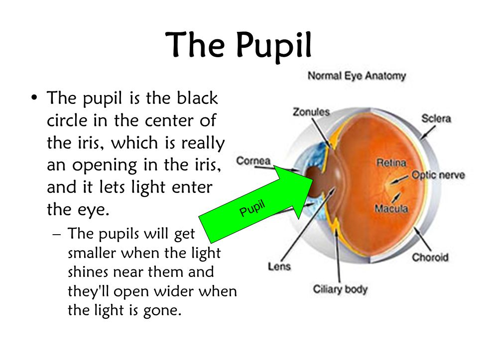 The Pupil The pupil is the black circle in the center of the iris, which is really an opening in the iris, and it lets light enter the eye.