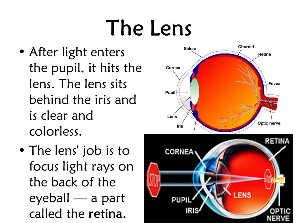 The Lens After light enters the pupil, it hits the lens. The lens sits behind the iris and is clear and colorless.