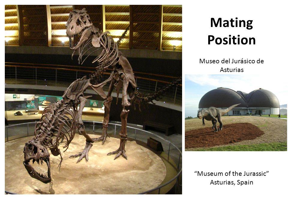 Mating Position Museo del Jurásico de Asturias