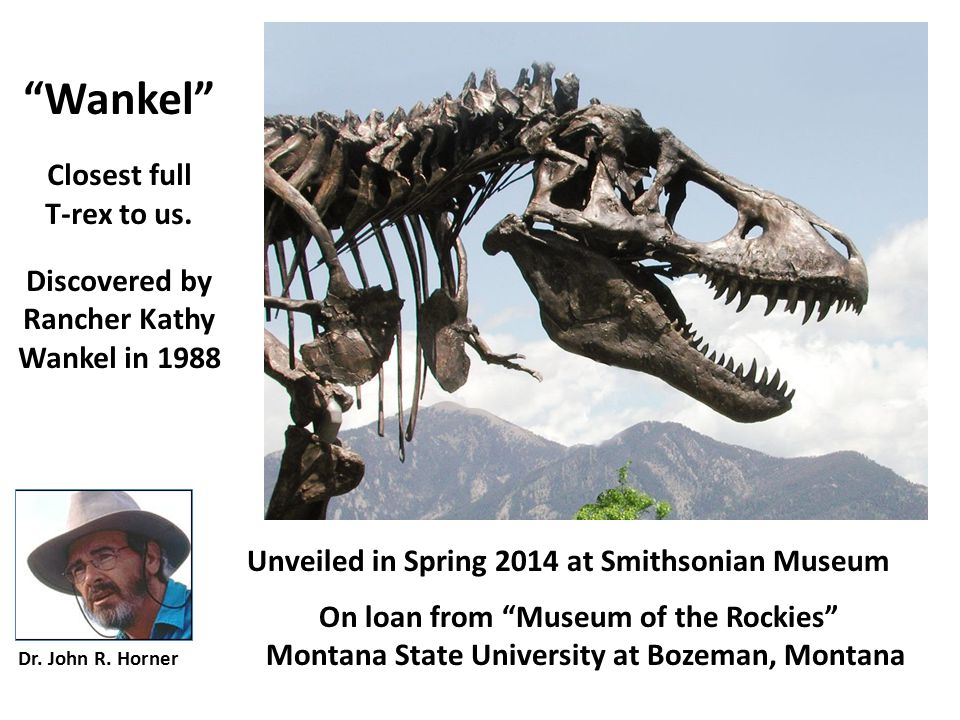 Wankel Closest full T-rex to us. Discovered by Rancher Kathy