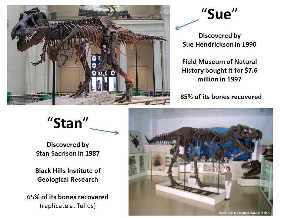 Sue Stan Discovered by Sue Hendrickson in 1990