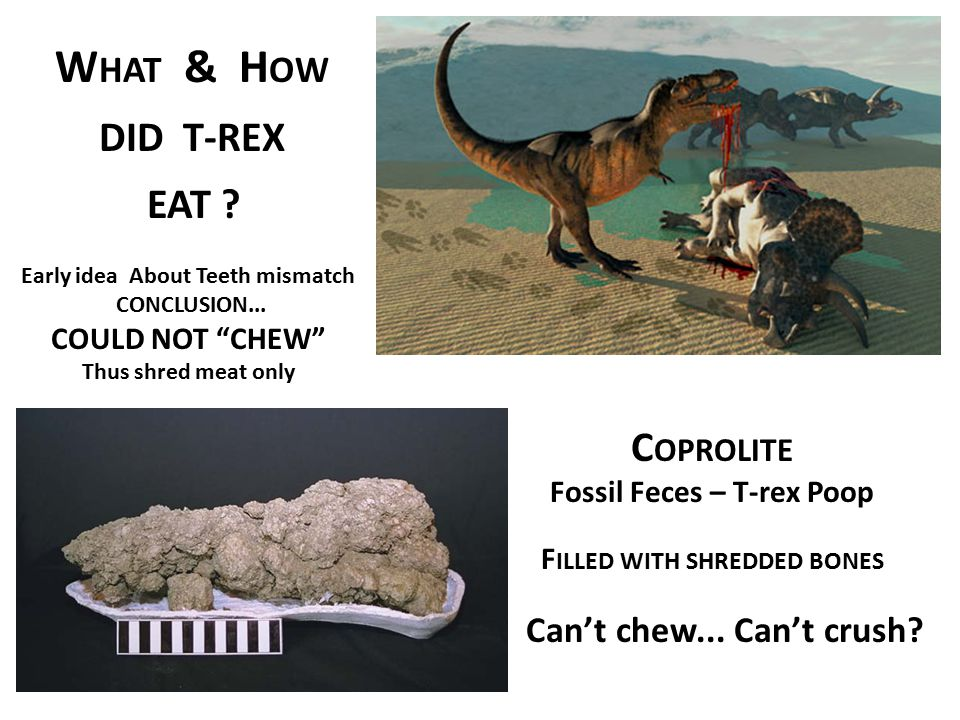 What & How DID T-REX Coprolite Can't chew... Can't crush