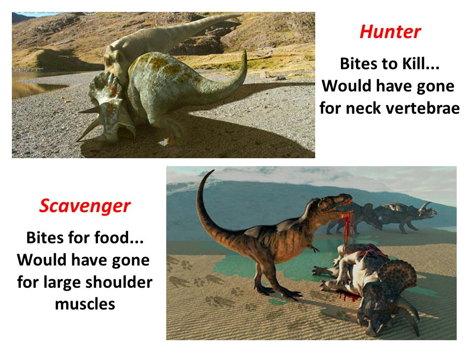 Hunter Scavenger Bites to Kill... Would have gone for neck vertebrae